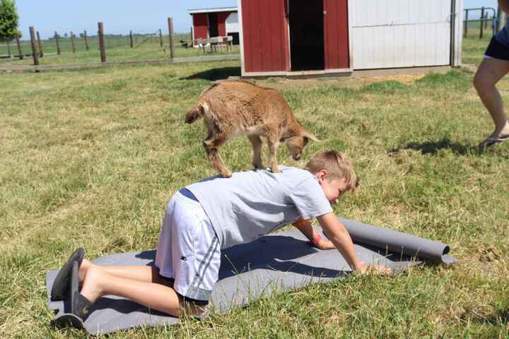 Photos from Zoga Goat Yoga's post